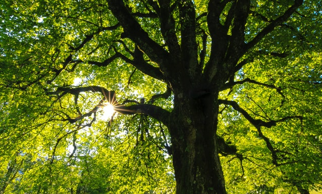 looking up at a big tree that represents growth